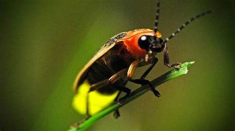 Indiana Lawmaker Taking Up Cause To Declare A State Bug