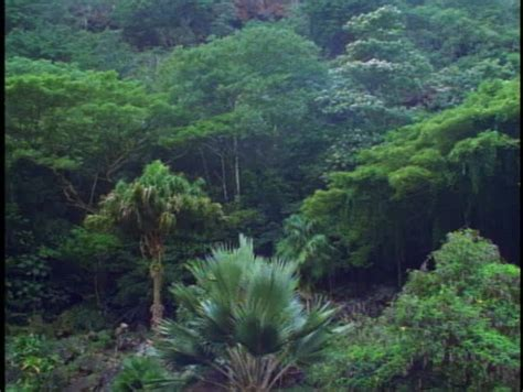 Green Jungle And Rainforest On Oahu In Hawaii Stock