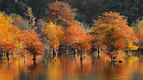 Storm, early cold brought brighter fall colors to South