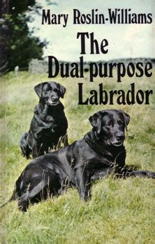 Website_Caccia - Dual_Purpose_labrador_3